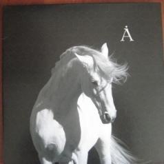 Аквариум: Лошадь белая