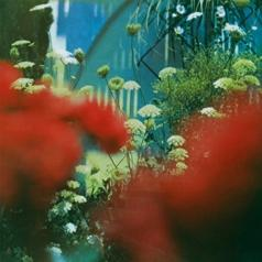 Pulled Apart By Horses: The Haze