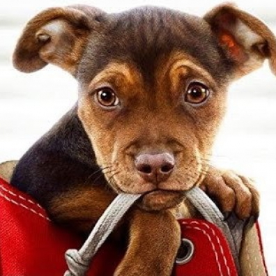 Mychael Danna (Майкл Данна): A Dog'S Way Home