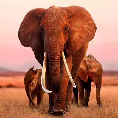 Alex Heffes (Алекс Хеффес): The Elephant Queen