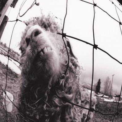 Pearl Jam (Перл Джем): Vs.