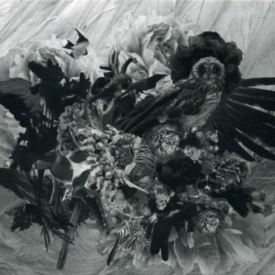 Mujuice (Муджу́С): Metamorphosis